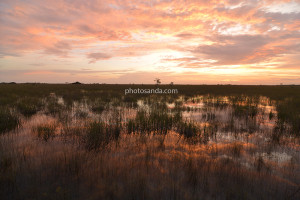 Everglades / united states of america